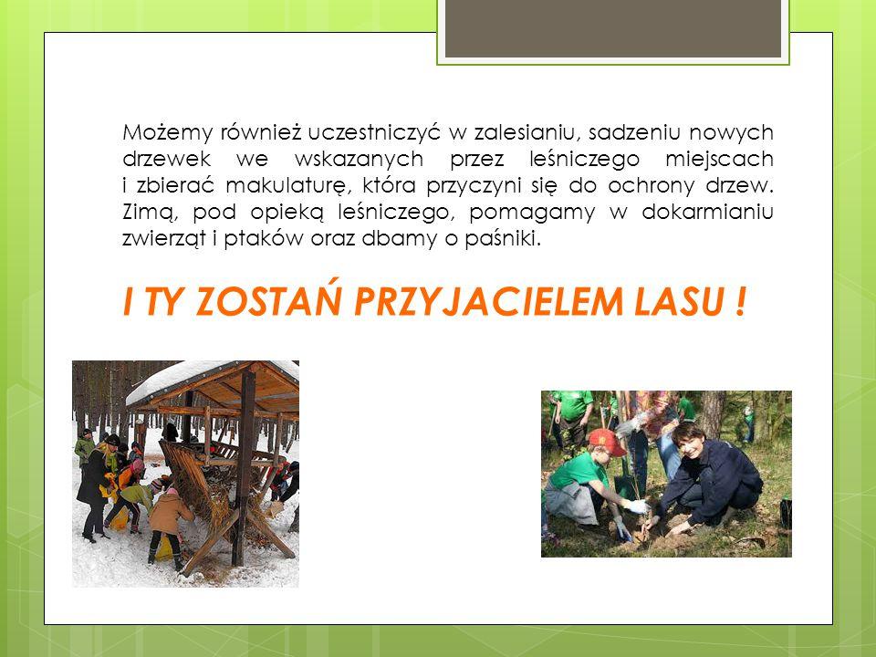 Możemy również uczestniczyć w zalesianiu, sadzeniu nowych drzewek we wskazanych przez leśniczego miejscach i zbierać makulaturę, która przyczyni się d
