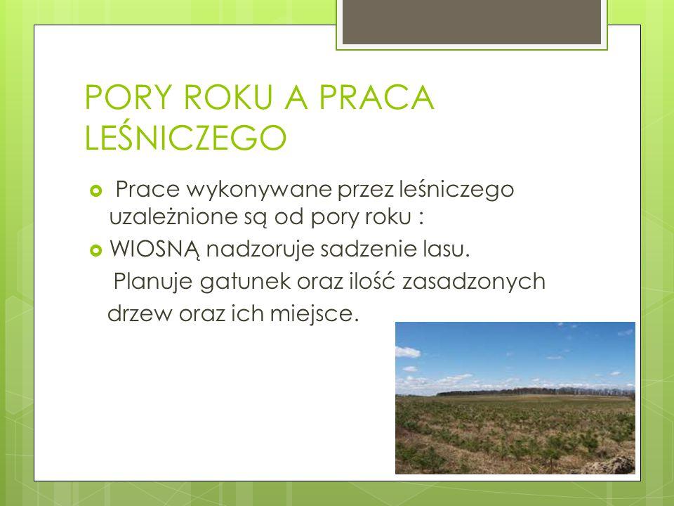 PORY ROKU A PRACA LEŚNICZEGO  Prace wykonywane przez leśniczego uzależnione są od pory roku :  WIOSNĄ nadzoruje sadzenie lasu. Planuje gatunek oraz