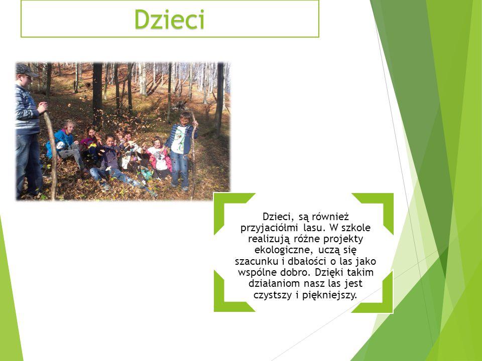 Dzieci Dzieci, są również przyjaciółmi lasu. W szkole realizują różne projekty ekologiczne, uczą się szacunku i dbałości o las jako wspólne dobro. Dzi