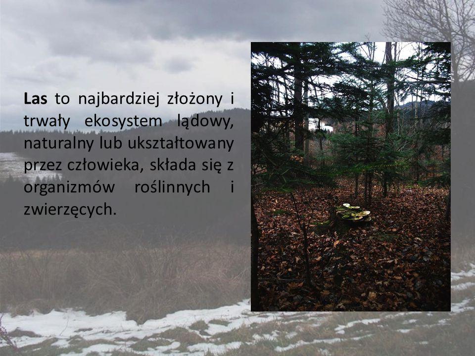 Las to najbardziej złożony i trwały ekosystem lądowy, naturalny lub ukształtowany przez człowieka, składa się z organizmów roślinnych i zwierzęcych.