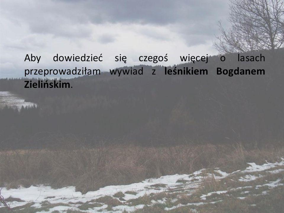 Aby dowiedzieć się czegoś więcej o lasach przeprowadziłam wywiad z leśnikiem Bogdanem Zielińskim.
