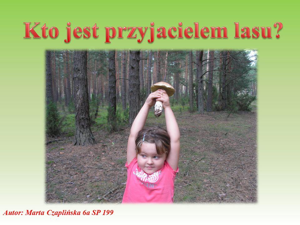 Przyjacielem lasu jest ten, kto szanuje przyrodę, nie niszczy zieleni.