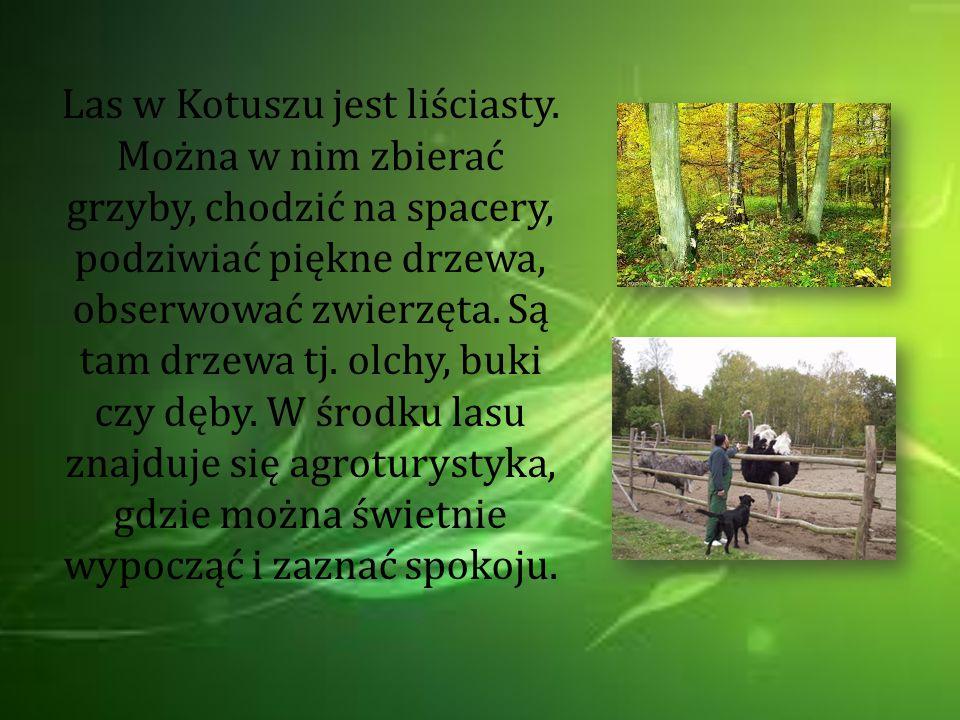 Las w Ksieginkach