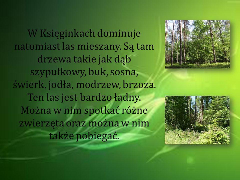 W Księginkach dominuje natomiast las mieszany. Są tam drzewa takie jak dąb szypułkowy, buk, sosna, świerk, jodła, modrzew, brzoza. Ten las jest bardzo