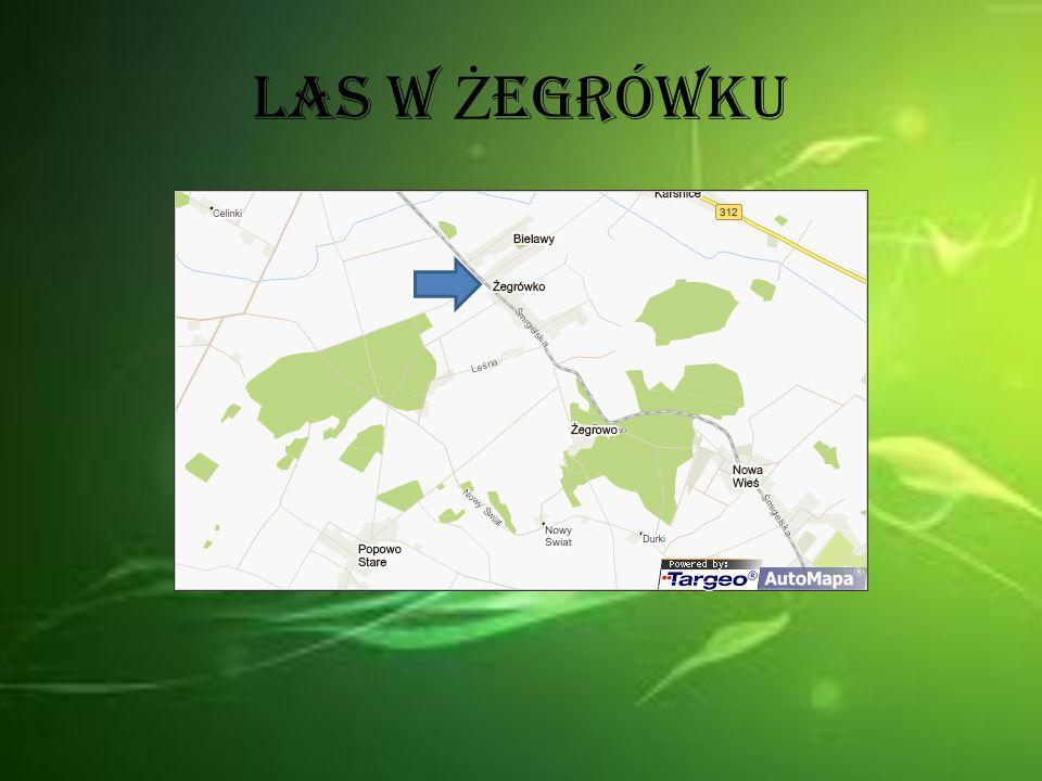 Las w Żegrówku to las mieszany tak jak w Księginkach.