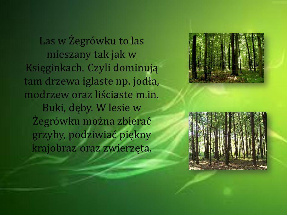 Las w Żegrówku to las mieszany tak jak w Księginkach. Czyli dominują tam drzewa iglaste np. jodła, modrzew oraz liściaste m.in. Buki, dęby. W lesie w