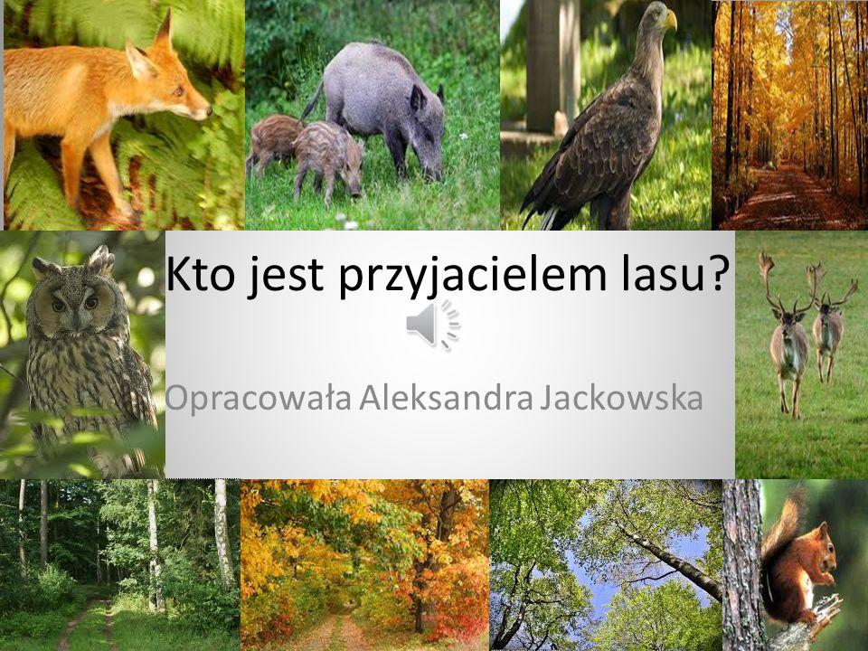 Kto jest przyjacielem lasu? Opracowała Aleksandra Jackowska