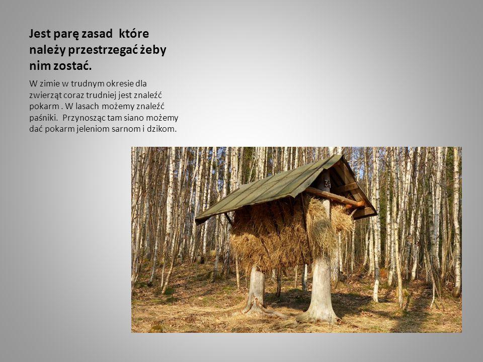 Jest parę zasad które należy przestrzegać żeby nim zostać. W zimie w trudnym okresie dla zwierząt coraz trudniej jest znaleźć pokarm. W lasach możemy