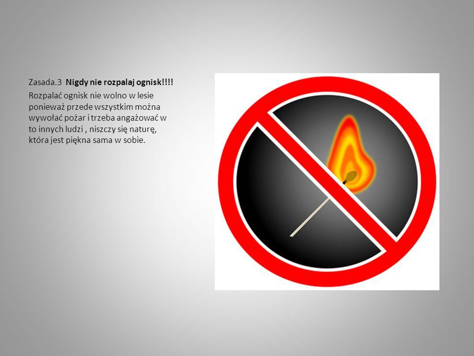 Zasada.3 Nigdy nie rozpalaj ognisk!!!! Rozpalać ognisk nie wolno w lesie ponieważ przede wszystkim można wywołać pożar i trzeba angażować w to innych
