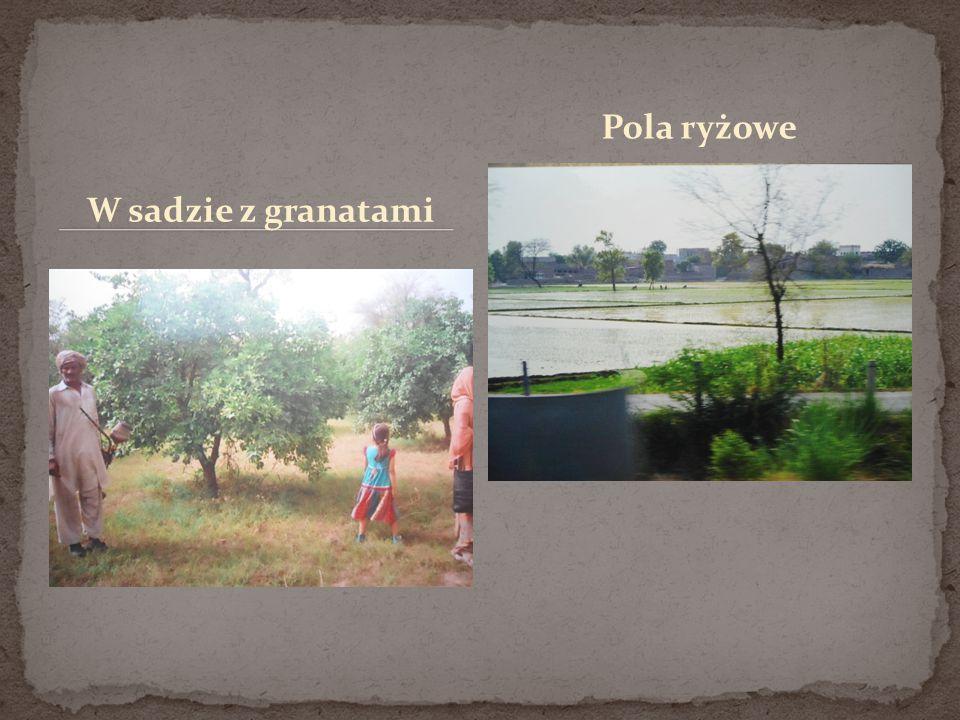 W sadzie z granatami Pola ryżowe