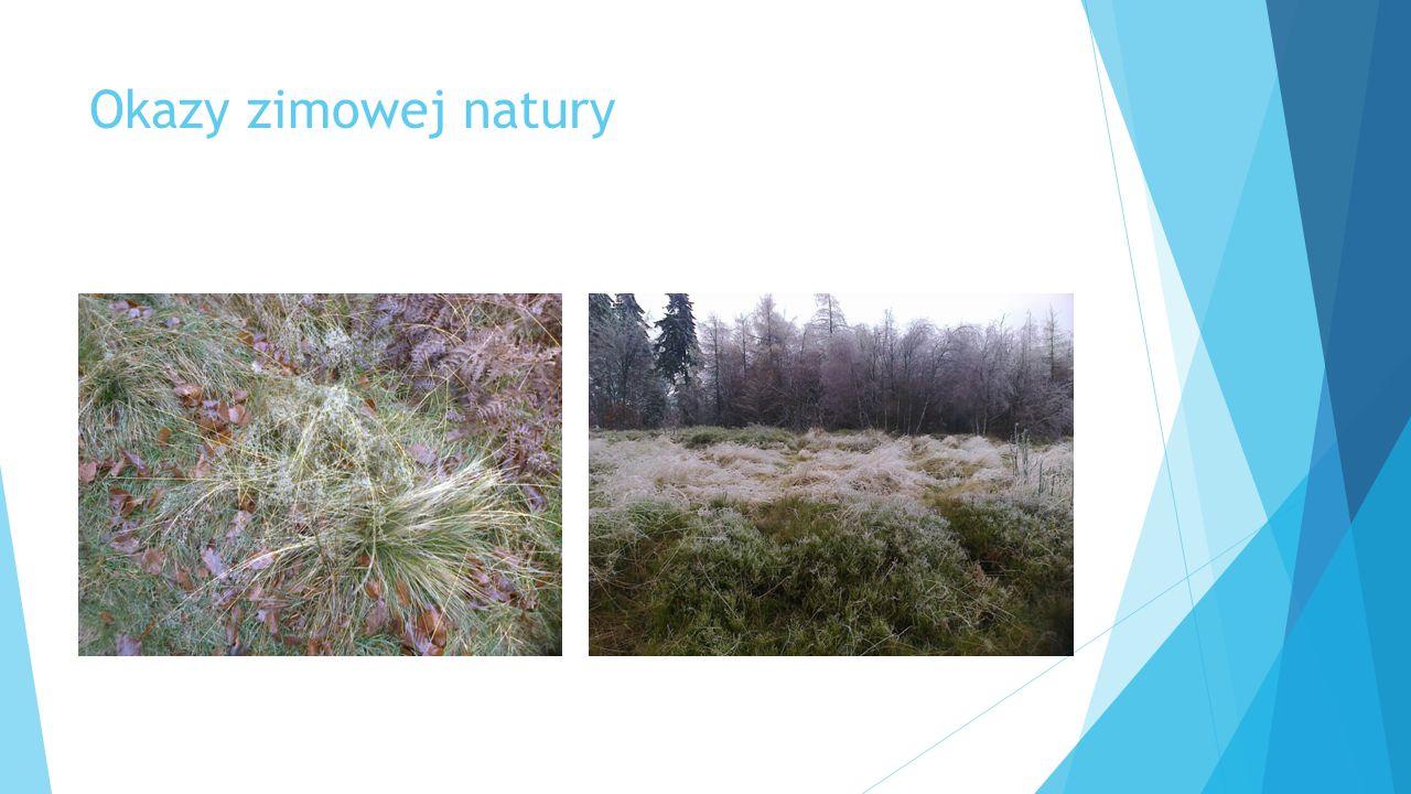 Okazy zimowej natury