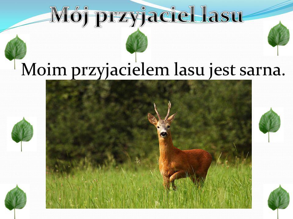 Jest to ssak z rodziny jeleniowatych i należy do jednych z najważniejszych zwierząt w Europie.