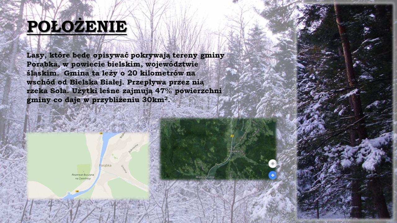 POŁOŻENIE Lasy, które będę opisywać pokrywają tereny gminy Porąbka, w powiecie bielskim, województwie śląskim.