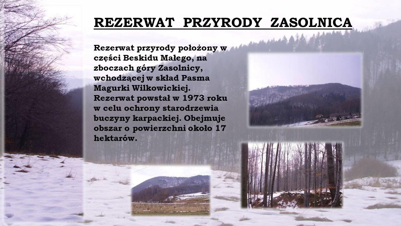 Rezerwat przyrody położony w części Beskidu Małego, na zboczach góry Zasolnicy, wchodzącej w skład Pasma Magurki Wilkowickiej.