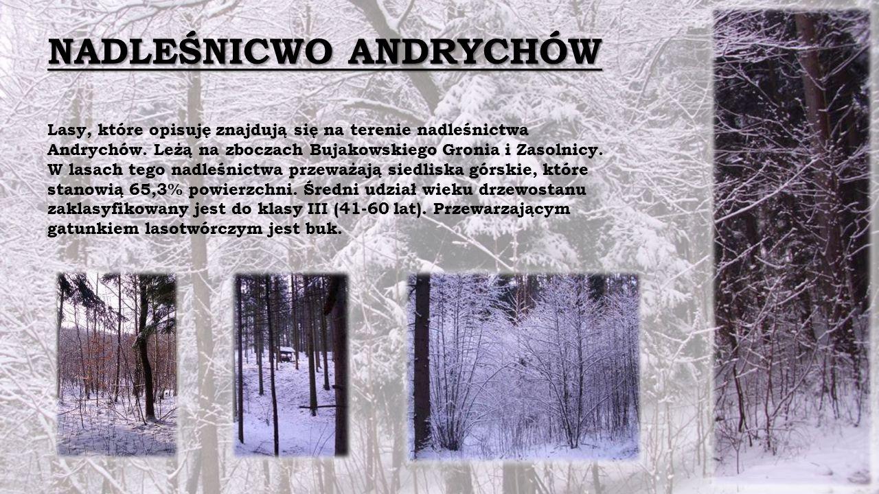 NADLEŚNICWO ANDRYCHÓW Lasy, które opisuję znajdują się na terenie nadleśnictwa Andrychów.