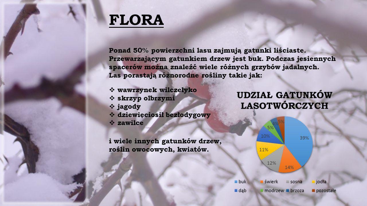 FLORA Ponad 50% powierzchni lasu zajmują gatunki liściaste.