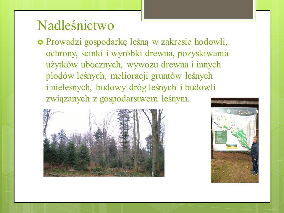 Nadleśnictwo  Prowadzi gospodarkę leśną w zakresie hodowli, ochrony, ścinki i wyróbki drewna, pozyskiwania użytków ubocznych, wywozu drewna i innych