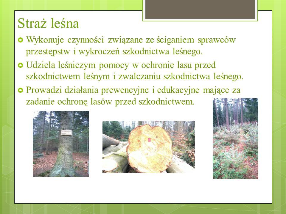 Straż leśna  Wykonuje czynności związane ze ściganiem sprawców przestępstw i wykroczeń szkodnictwa leśnego.