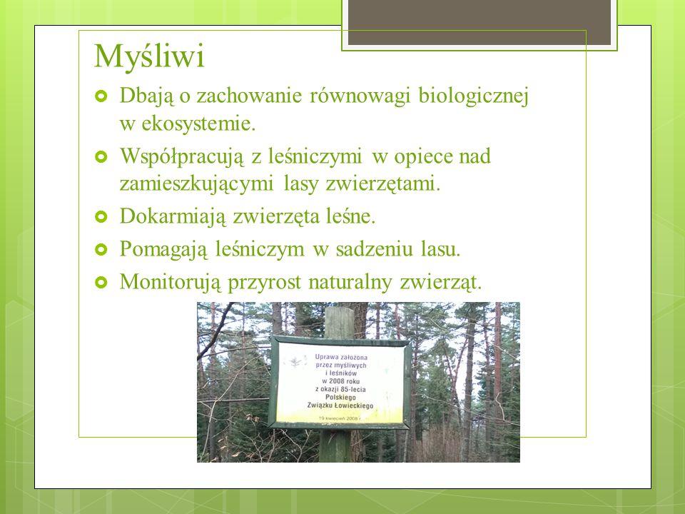Myśliwi  Dbają o zachowanie równowagi biologicznej w ekosystemie.  Współpracują z leśniczymi w opiece nad zamieszkującymi lasy zwierzętami.  Dokarm