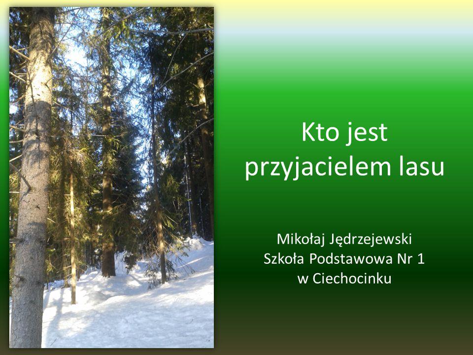 Kto jest przyjacielem lasu Mikołaj Jędrzejewski Szkoła Podstawowa Nr 1 w Ciechocinku