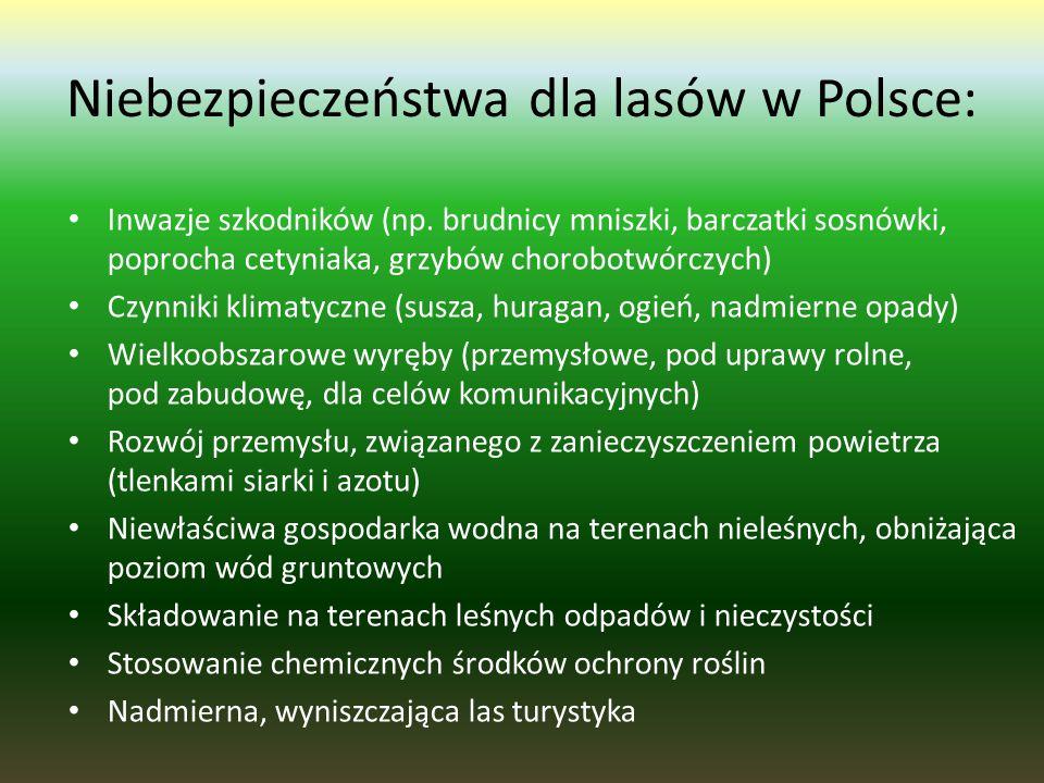 Niebezpieczeństwa dla lasów w Polsce: Inwazje szkodników (np.