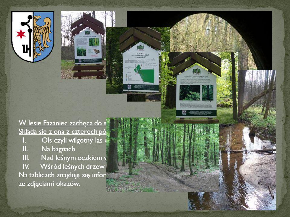 W lesie Fazaniec zachęca do spacerów ścieżka przyrodniczo-dydaktyczna. Składa się z ona z czterech pól obserwacyjnych: I. Ols czyli wilgotny las olcho