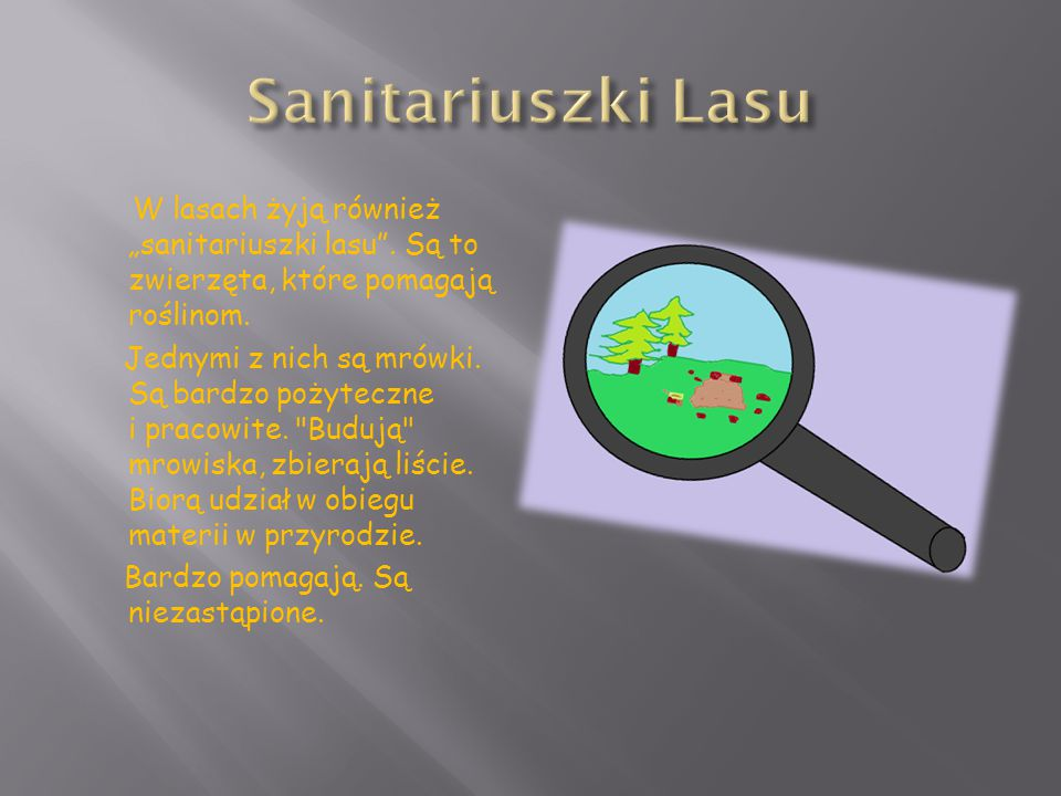 """W lasach żyją również """"sanitariuszki lasu"""". Są to zwierzęta, które pomagają roślinom. Jednymi z nich są mrówki. Są bardzo pożyteczne i pracowite."""