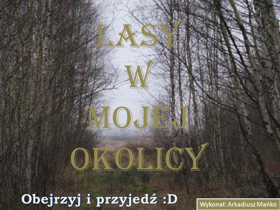Lasy w mojej okolicy Wykonał: Arkadiusz Mańko