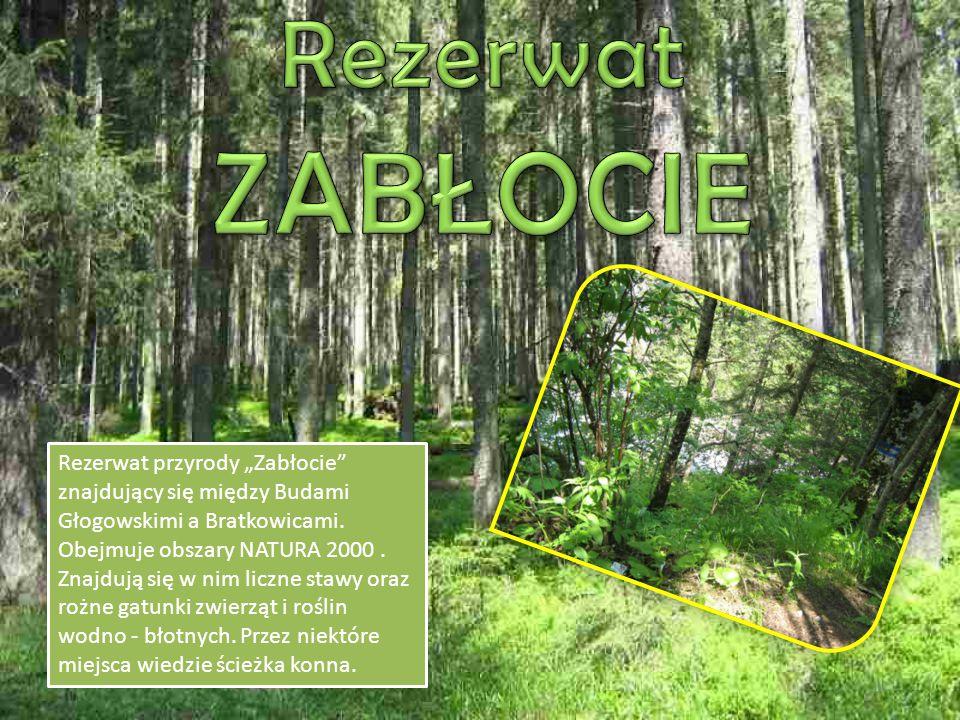 """Rezerwat przyrody """"Zabłocie znajdujący się między Budami Głogowskimi a Bratkowicami."""
