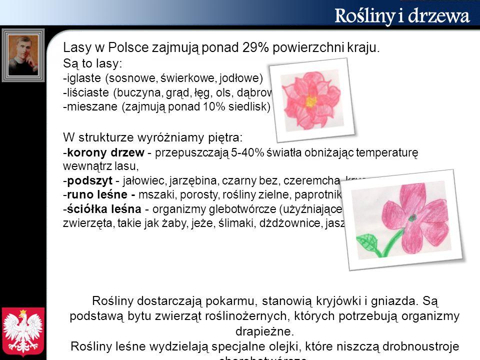 Ro ś liny i drzewa Lasy w Polsce zajmują ponad 29% powierzchni kraju. Są to lasy: -iglaste ( sosnowe, świerkowe, jodłowe ) -liściaste ( buczyna, grąd,
