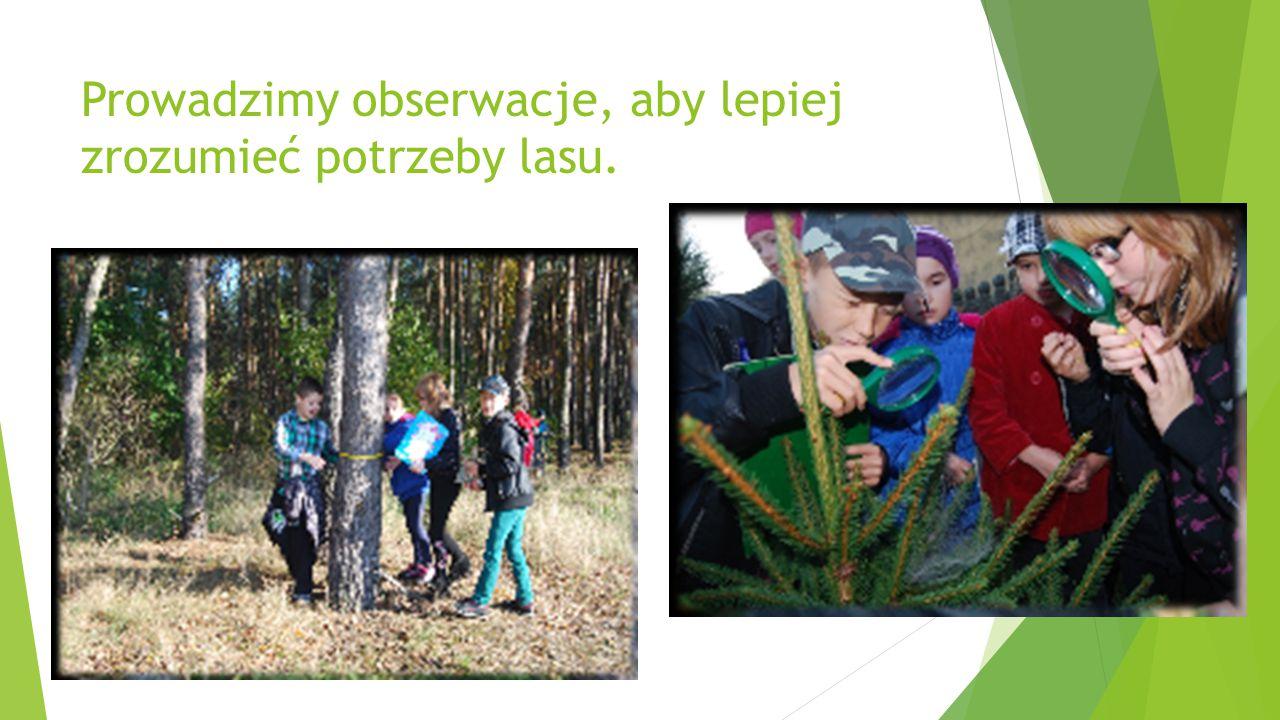 Prowadzimy obserwacje, aby lepiej zrozumieć potrzeby lasu.