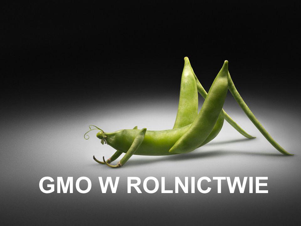 GMO W ROLNICTWIE
