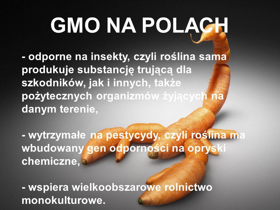GMO NA POLACH - odporne na insekty, czyli roślina sama produkuje substancję trującą dla szkodników, jak i innych, także pożytecznych organizmów żyjący