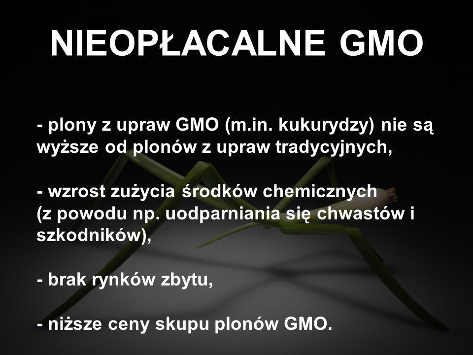 PUŁAPKA GMO - - GMO rozprzestrzenia się w niekontrolowany sposób w środowisku naturalnym, zanieczyszczając pola z tradycyjnymi uprawami, - producenci GMO wytyczają rolnikom procesy o naruszenie praw patentowych i kradzież nasion, nawet przypadku niezamierzonego skażenia pól, - umowy patentowe zabraniają rolnikom zachowywać nasiona na kolejne wysiewy i obligują ich do stosowania środków chemicznych, których producentami są z reguły producenci nasion GMO.