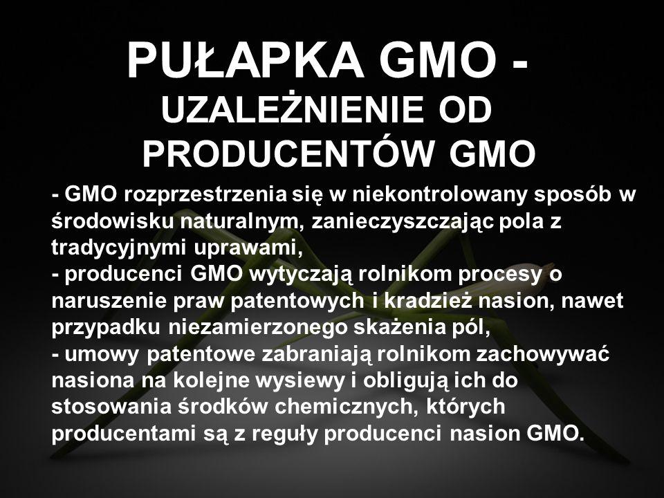 PUŁAPKA GMO - - GMO rozprzestrzenia się w niekontrolowany sposób w środowisku naturalnym, zanieczyszczając pola z tradycyjnymi uprawami, - producenci