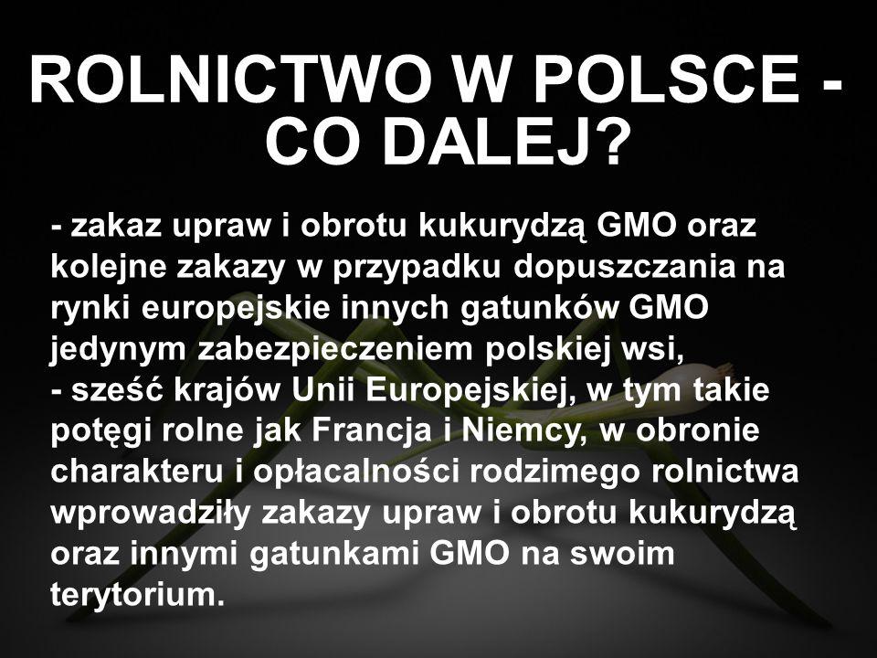 ROLNICTWO W POLSCE - - zakaz upraw i obrotu kukurydzą GMO oraz kolejne zakazy w przypadku dopuszczania na rynki europejskie innych gatunków GMO jedyny