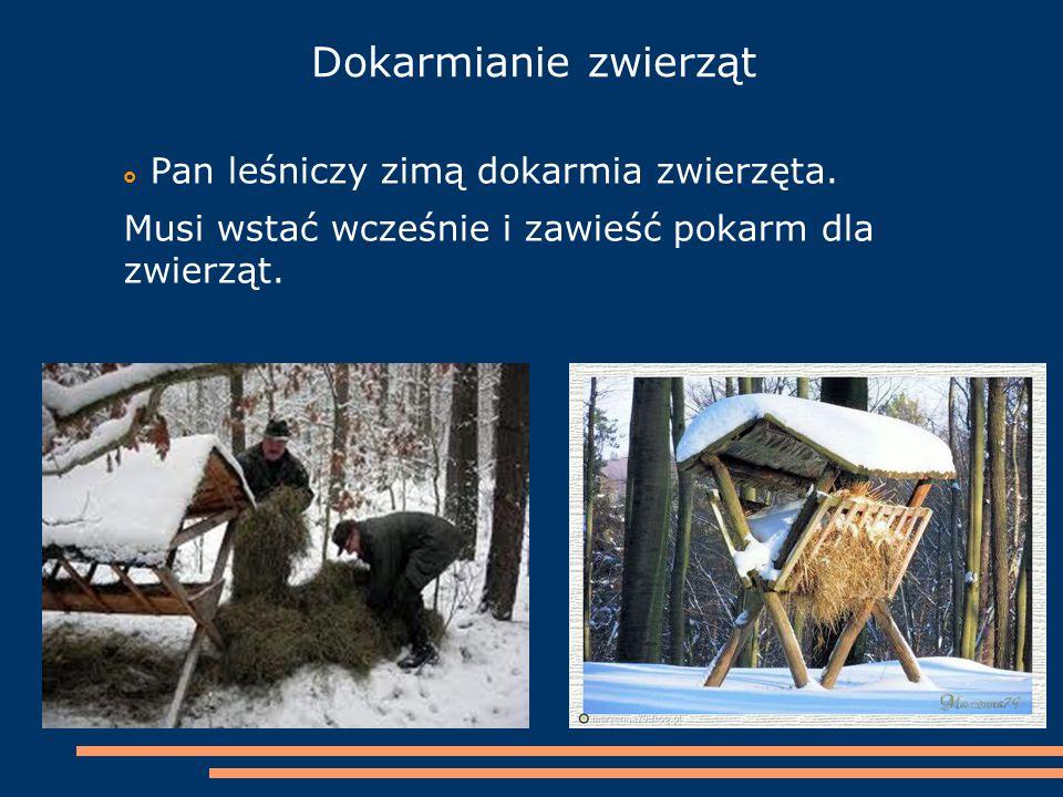 Dokarmianie zwierząt  Pan leśniczy zimą dokarmia zwierzęta. Musi wstać wcześnie i zawieść pokarm dla zwierząt.
