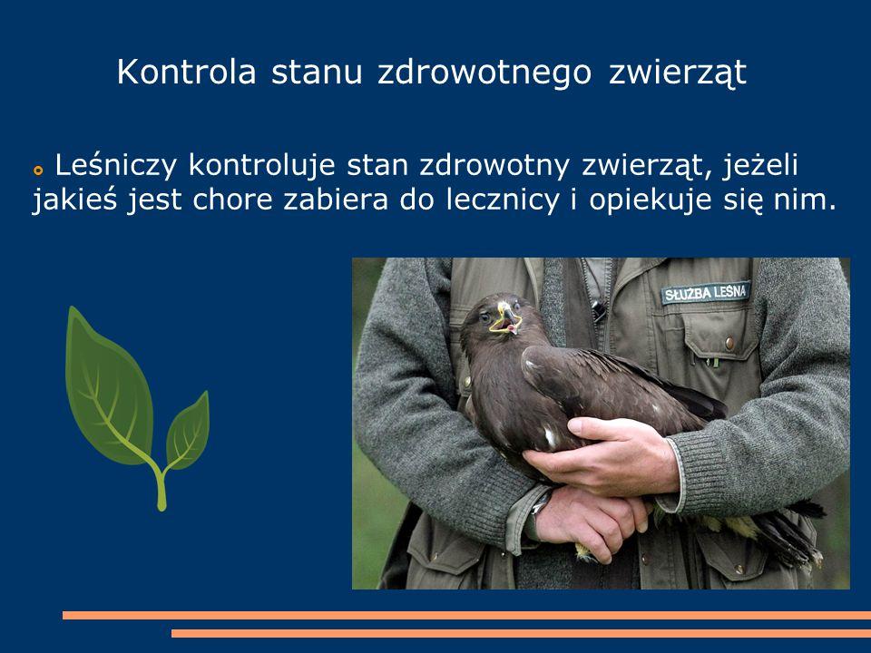 Kontrola stanu zdrowotnego zwierząt  Leśniczy kontroluje stan zdrowotny zwierząt, jeżeli jakieś jest chore zabiera do lecznicy i opiekuje się nim.