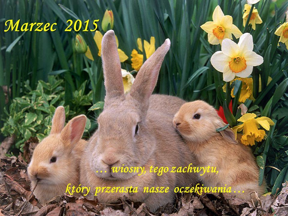 Marzec … wiosny, tego zachwytu, który przerasta nasze oczekiwania … Marzec 2015