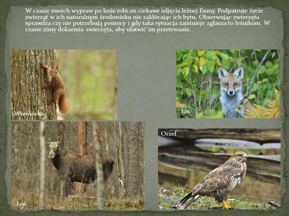 W czasie swoich wypraw po lesie robi on ciekawe zdjęcia leśnej fauny.
