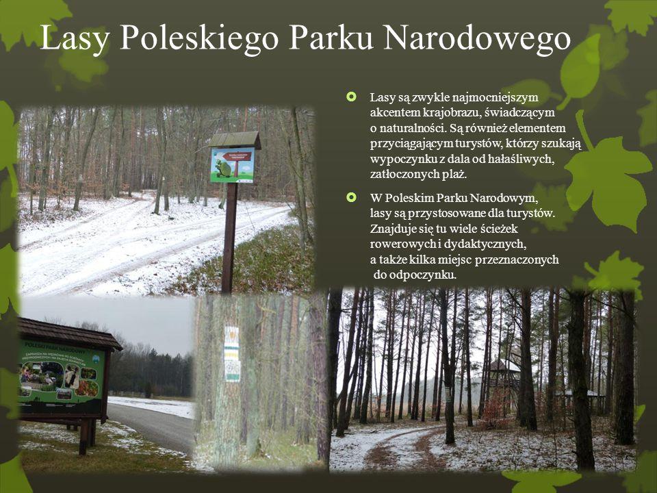 Lasy Poleskiego Parku Narodowego  Lasy są zwykle najmocniejszym akcentem krajobrazu, świadczącym o naturalności. Są również elementem przyciągającym
