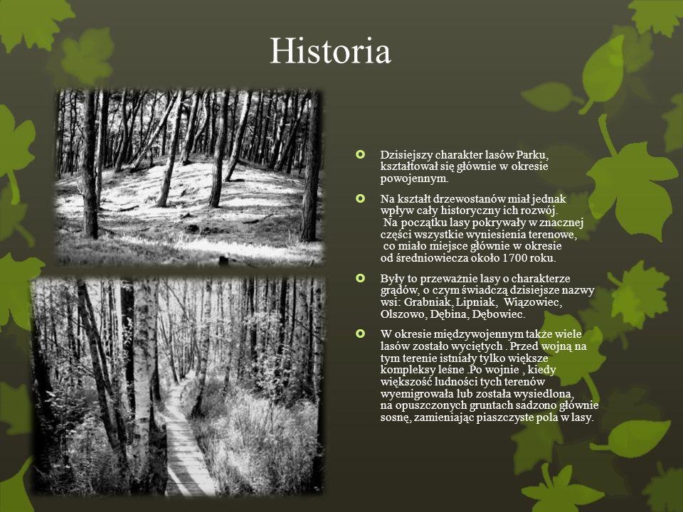 Historia  Dzisiejszy charakter lasów Parku, kształtował się głównie w okresie powojennym.  Na kształt drzewostanów miał jednak wpływ cały historyczn