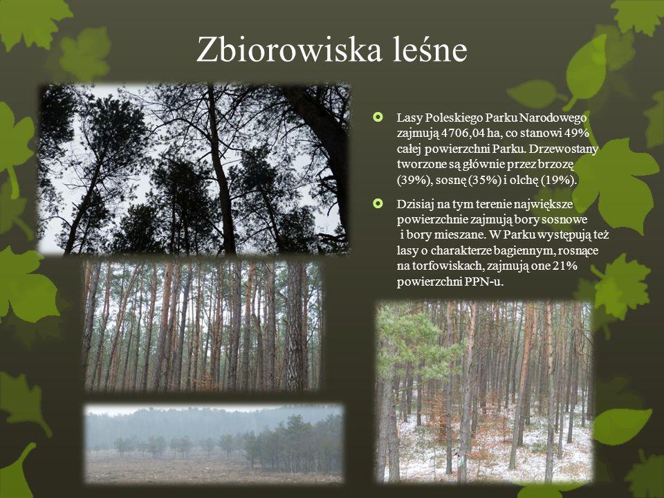 Zbiorowiska leśne  Lasy Poleskiego Parku Narodowego zajmują 4706,04 ha, co stanowi 49% całej powierzchni Parku. Drzewostany tworzone są głównie przez