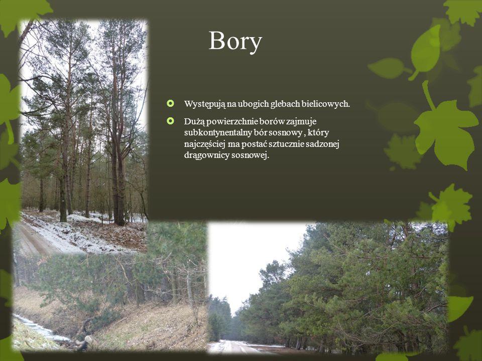 Bory  Występują na ubogich glebach bielicowych.  Dużą powierzchnie borów zajmuje subkontynentalny bór sosnowy, który najczęściej ma postać sztucznie