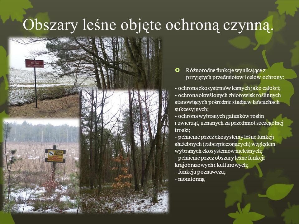 Obszary leśne objęte ochroną czynną.  Różnorodne funkcje wynikające z przyjętych przedmiotów i celów ochrony: - ochrona ekosystemów leśnych jako cało