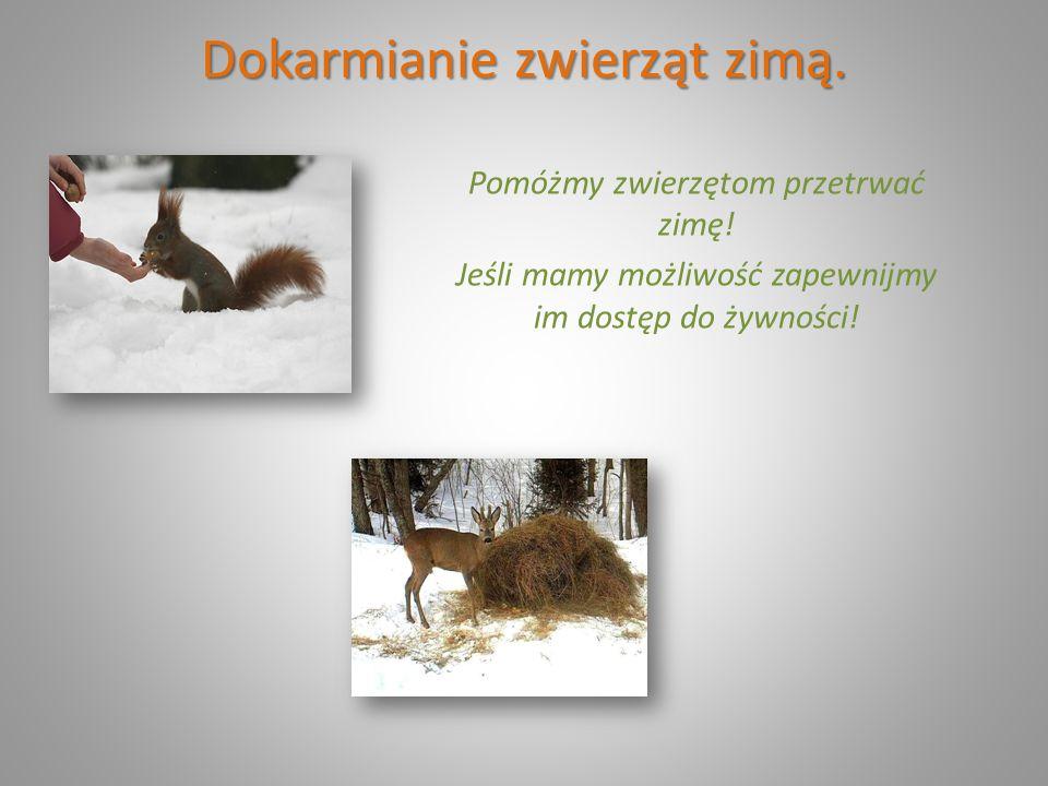 Dokarmianie zwierząt zimą. Pomóżmy zwierzętom przetrwać zimę! Jeśli mamy możliwość zapewnijmy im dostęp do żywności!