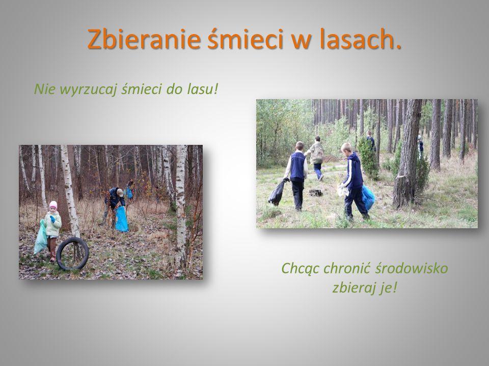 Zbieranie śmieci w lasach. Nie wyrzucaj śmieci do lasu! Chcąc chronić środowisko zbieraj je!