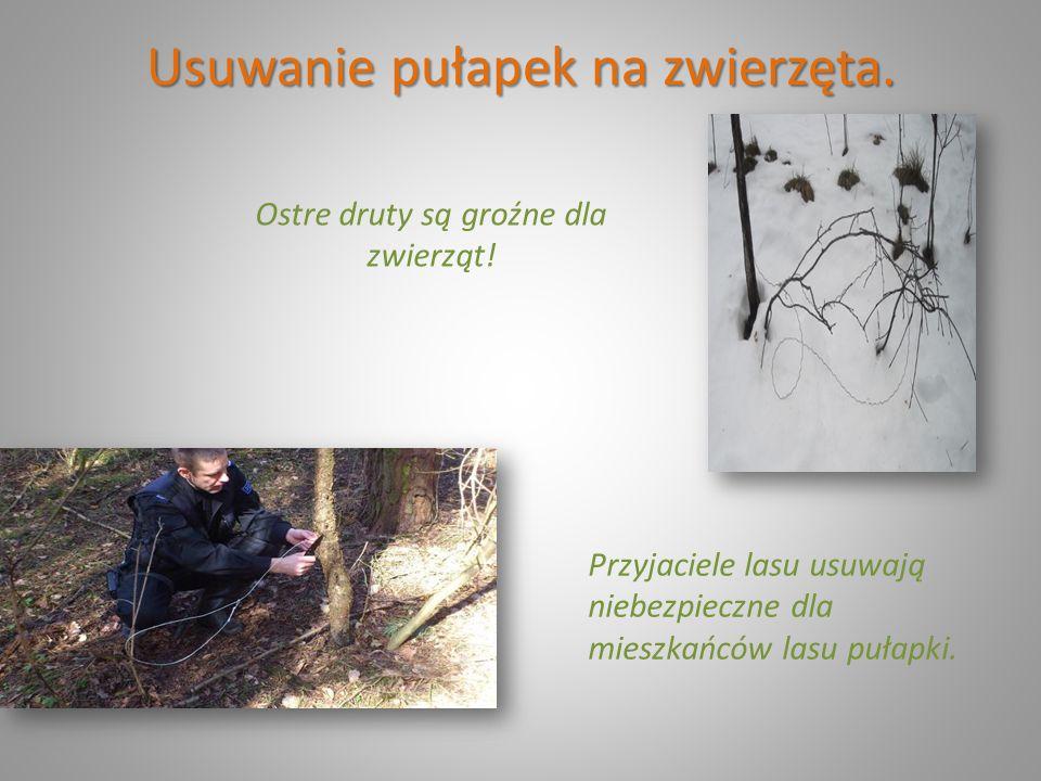 Usuwanie pułapek na zwierzęta. Ostre druty są groźne dla zwierząt! Przyjaciele lasu usuwają niebezpieczne dla mieszkańców lasu pułapki.