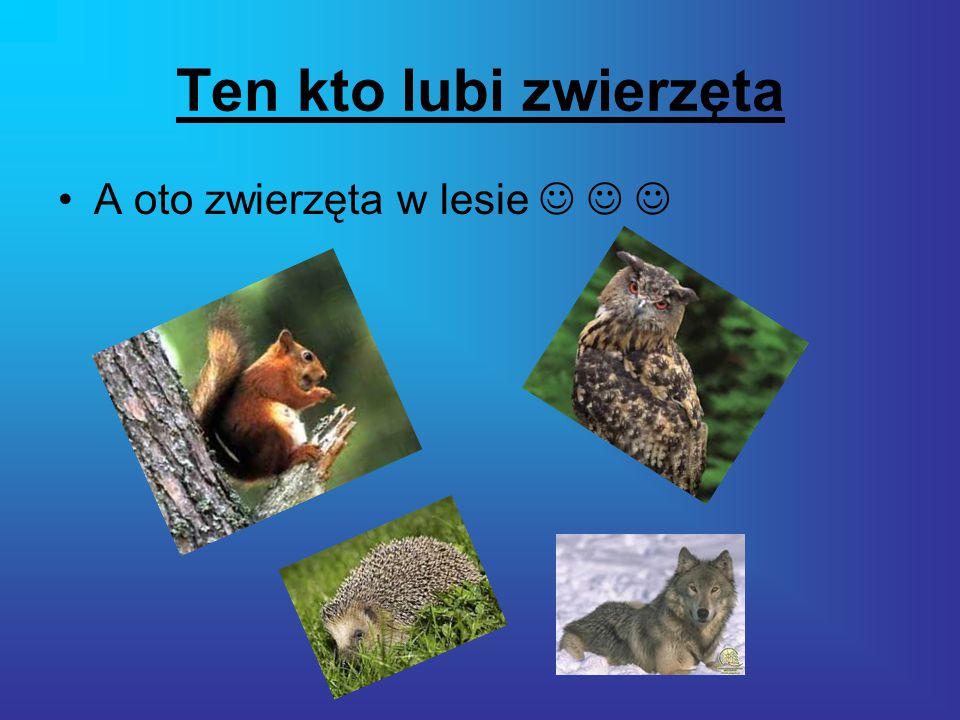 Ten kto lubi zwierzęta A oto zwierzęta w lesie