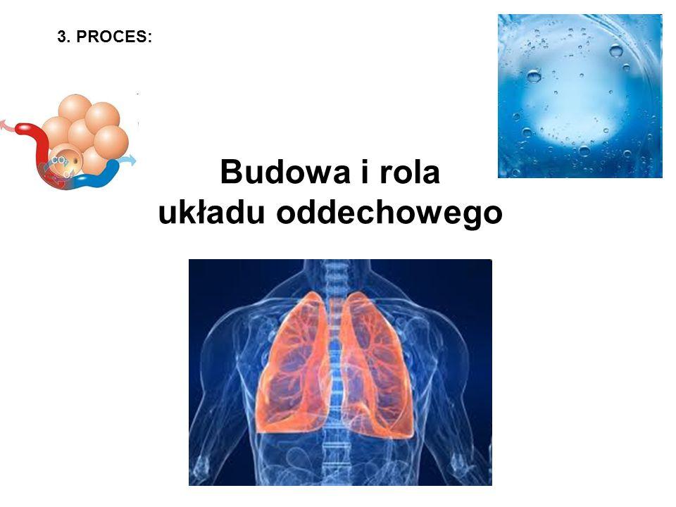 Budowa i rola układu oddechowego 3. PROCES:
